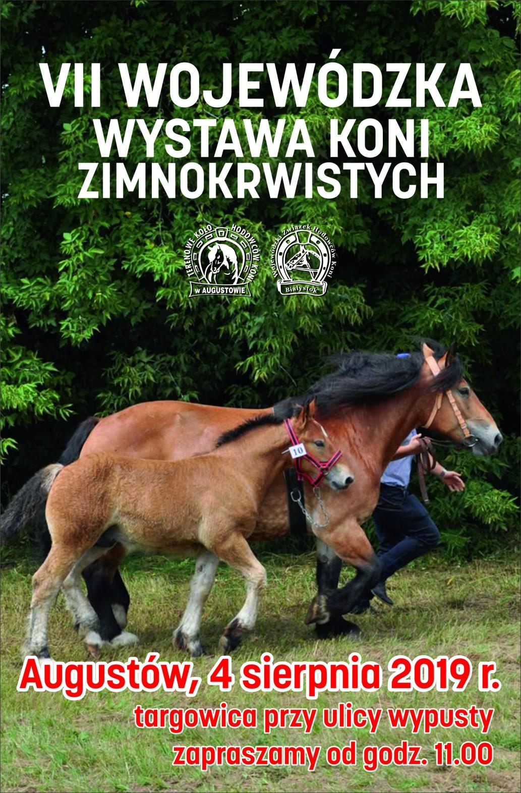 konie wystawa 2019